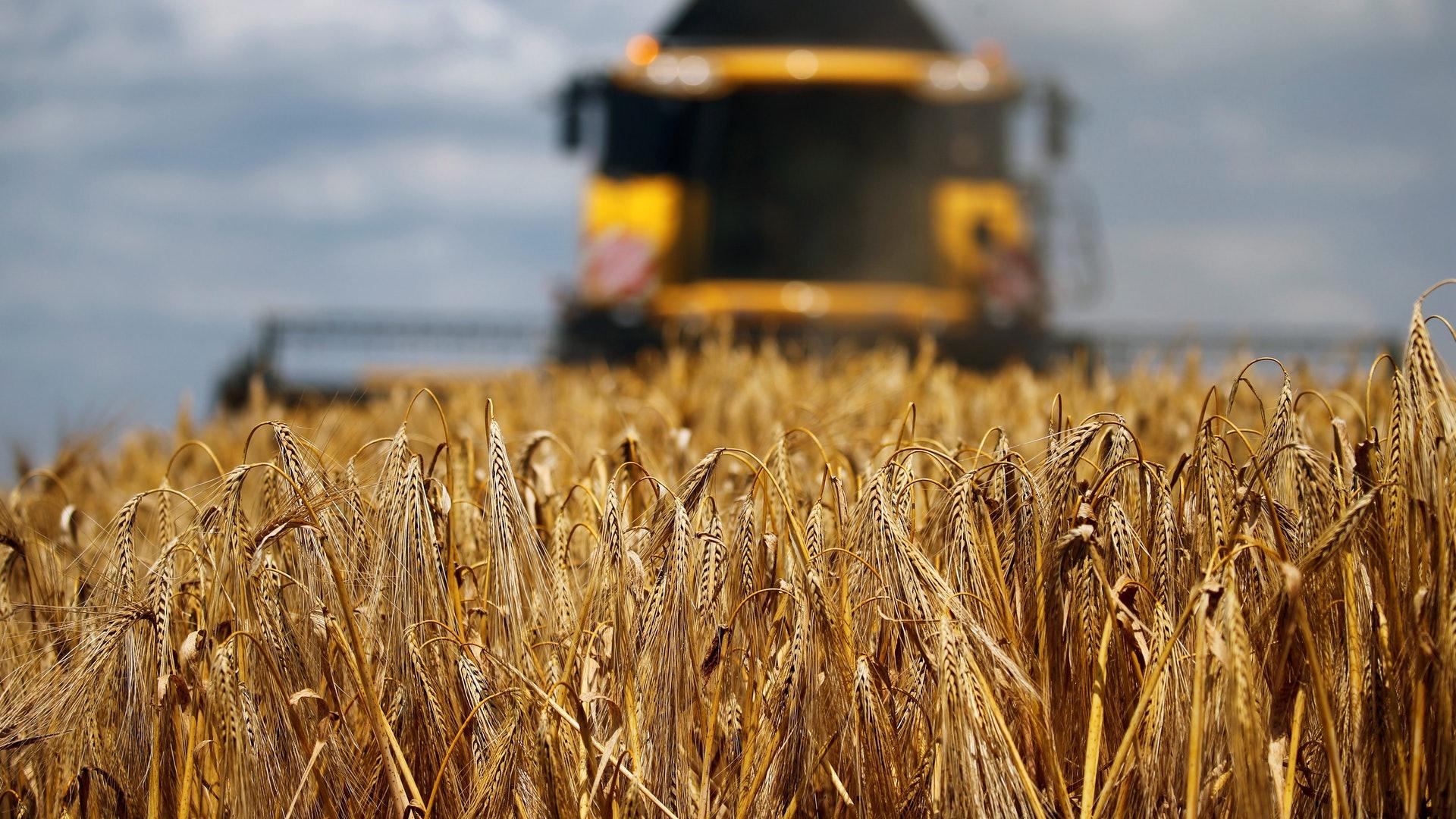 2020年5月19日起,澳洲對華出口的大麥將面臨高達80.5%的關稅,貿易總規模達10億美元。(Reuters)