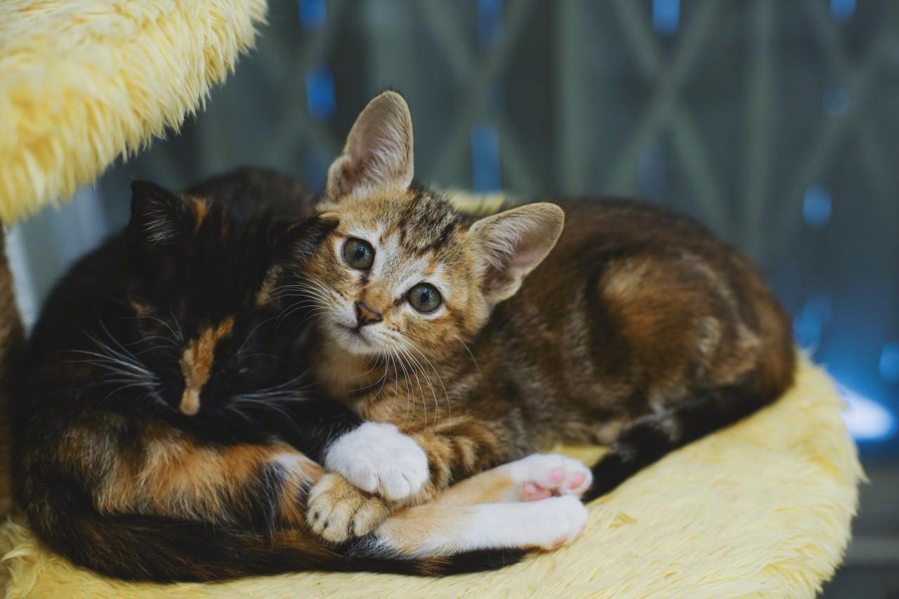在大澳推行了TNR計劃後,German用意放回成貓,幼貓便會捉回中心出領養。(沈敏怡攝)