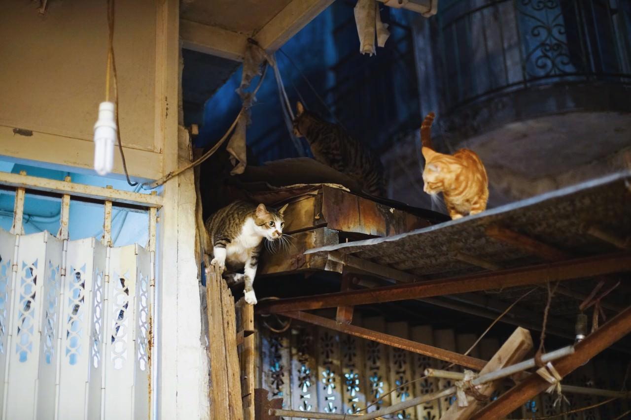 內街屋頂有一群常客貓,晚餐時間吹吹口哨便會現身。但German指不少年輕人近年選擇搬回大澳,將舊樓重建翻新,到時天台貓的去向何如,又是另一個社區問題。(沈敏怡攝)