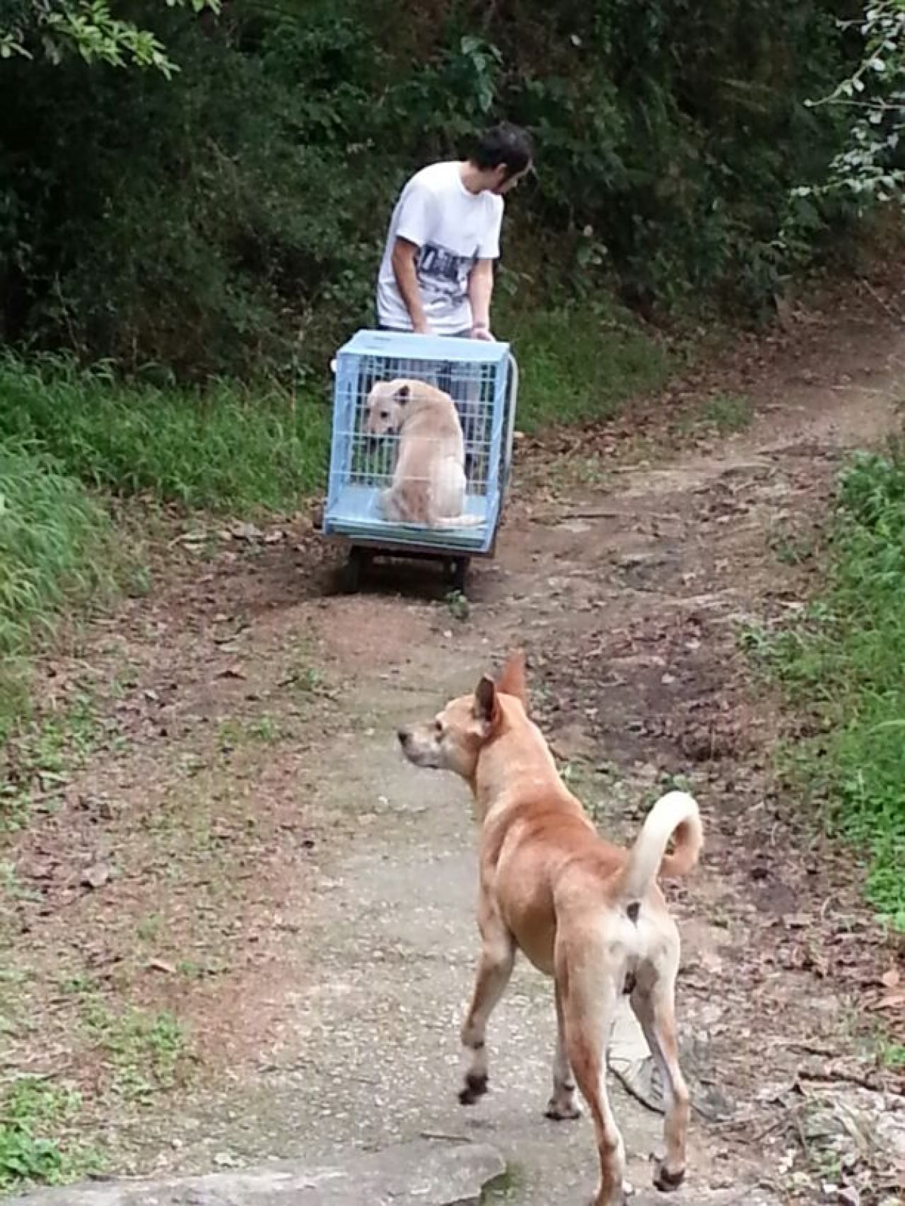 09年至今,獅子山行動組的義工,已為數百隻狗狗進行絕育,以控制狗隻數目。(NPV提供)