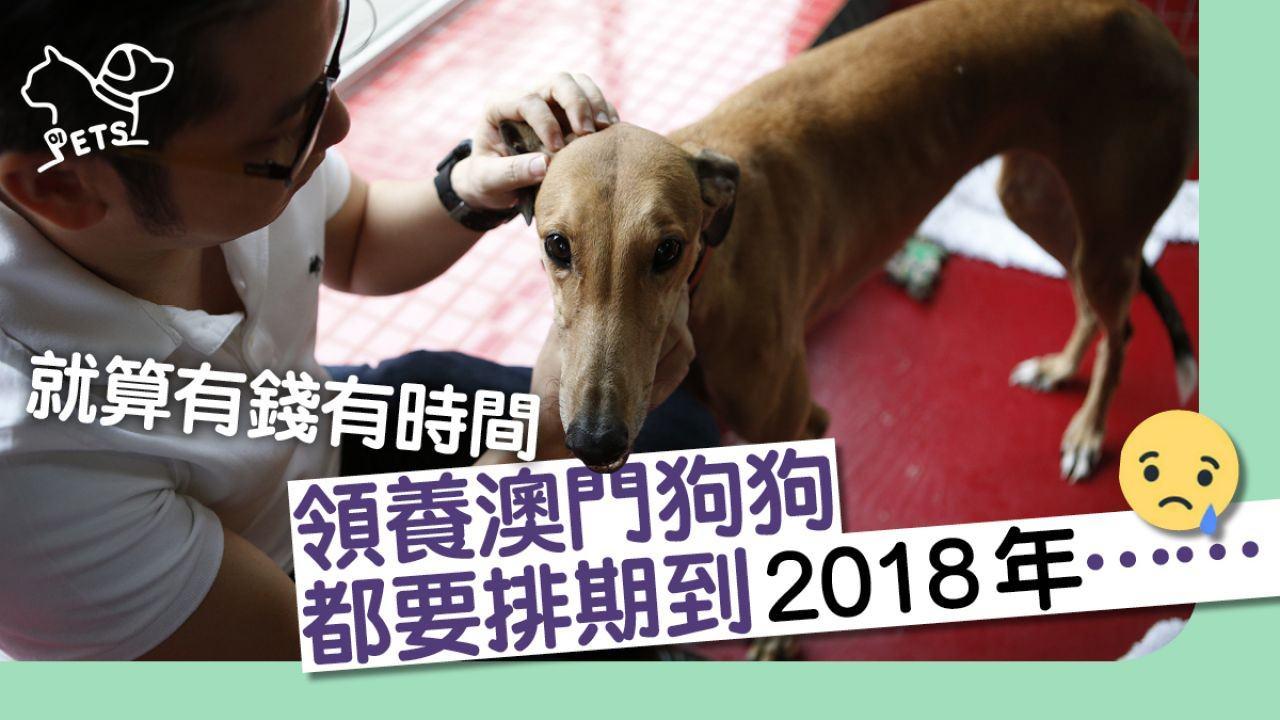 澳門屬於香港漁護署編排的第三組別,若領養來港須接受檢疫隔離。(禤宏俊攝)