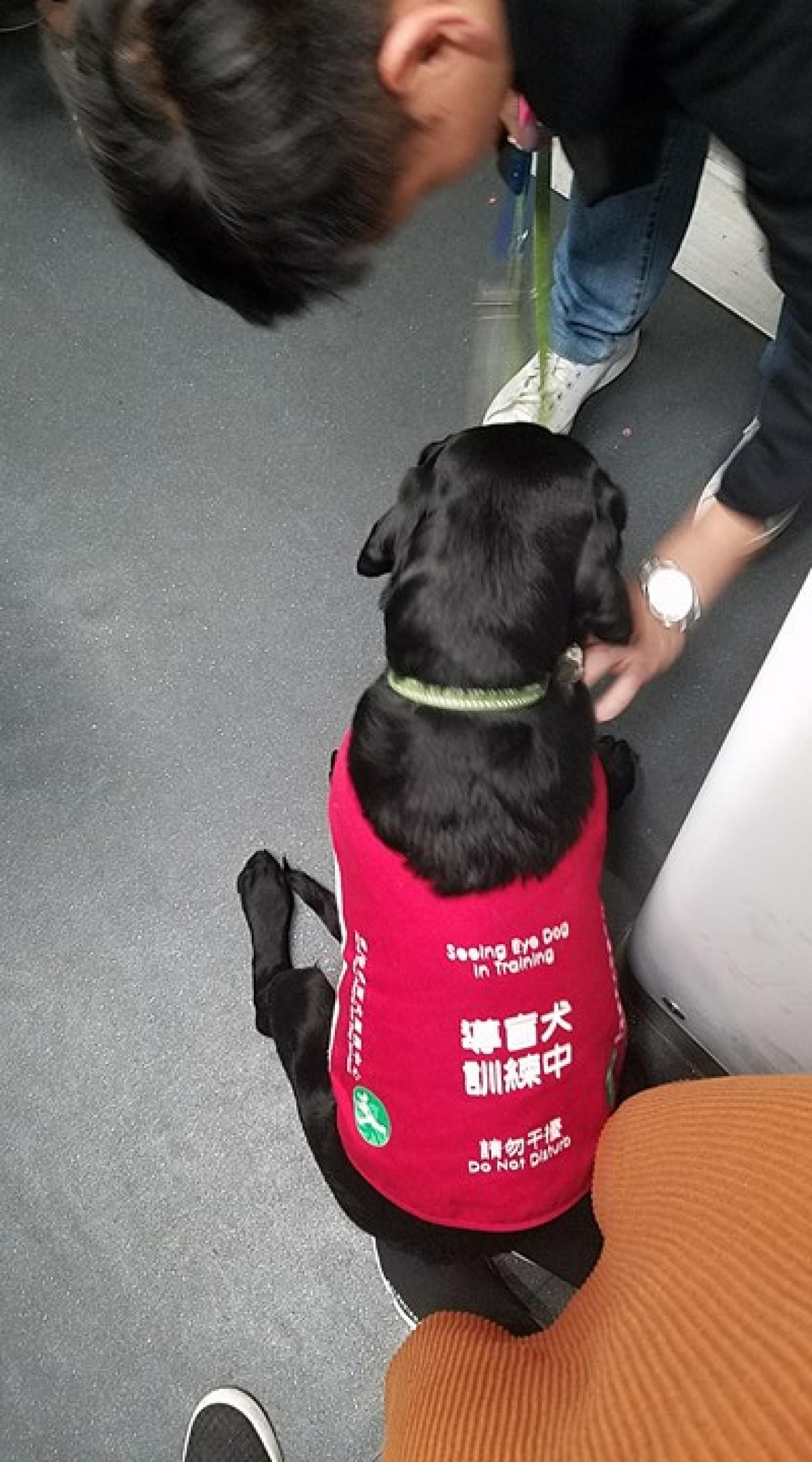 網民許小姐表示導盲犬或剛受訓,途中訓練員除按導盲犬的頭,亦多次傳達「Sit」的指令,導盲犬才坐下。(許小姐提供相片)