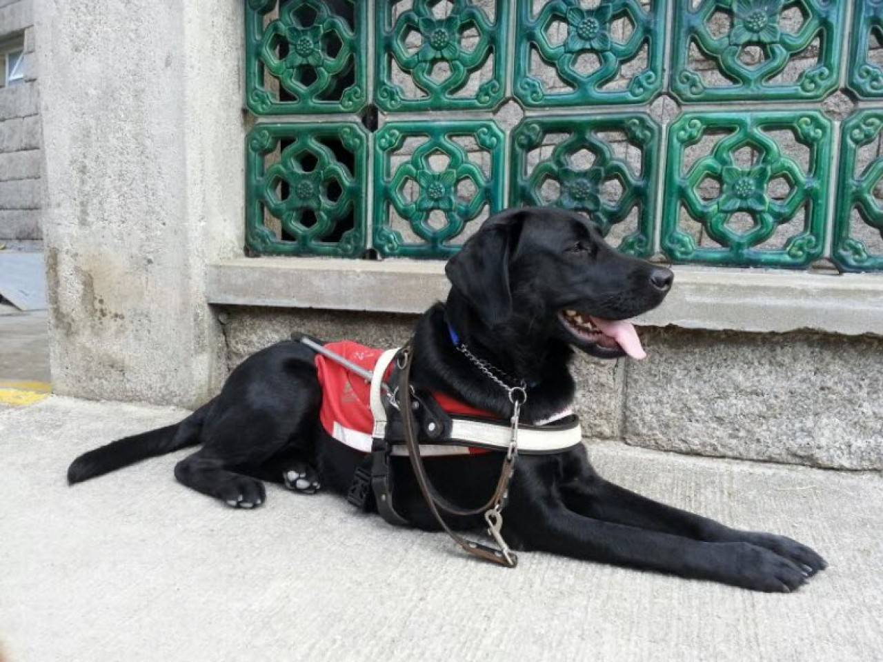 香港導盲犬服務中心的中心經理曾國樹表示,導盲犬於港鐵裏受訓是重要一環。(香港導盲犬服務中心網站圖片)
