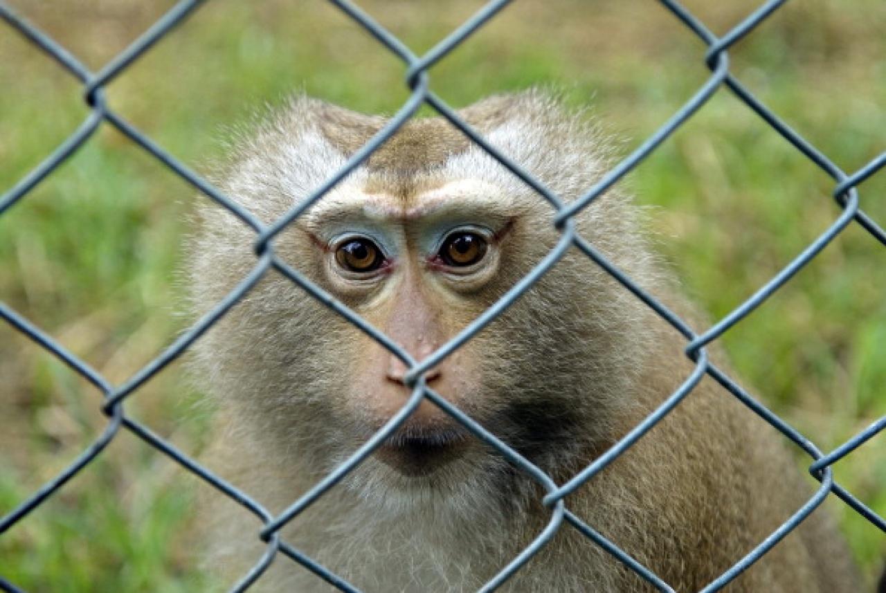 當你知道動物生活在野外是何等精彩時,你就會發現困養籠裏只餘下一個個空洞的眼神,毫無生氣。(Getty Images)