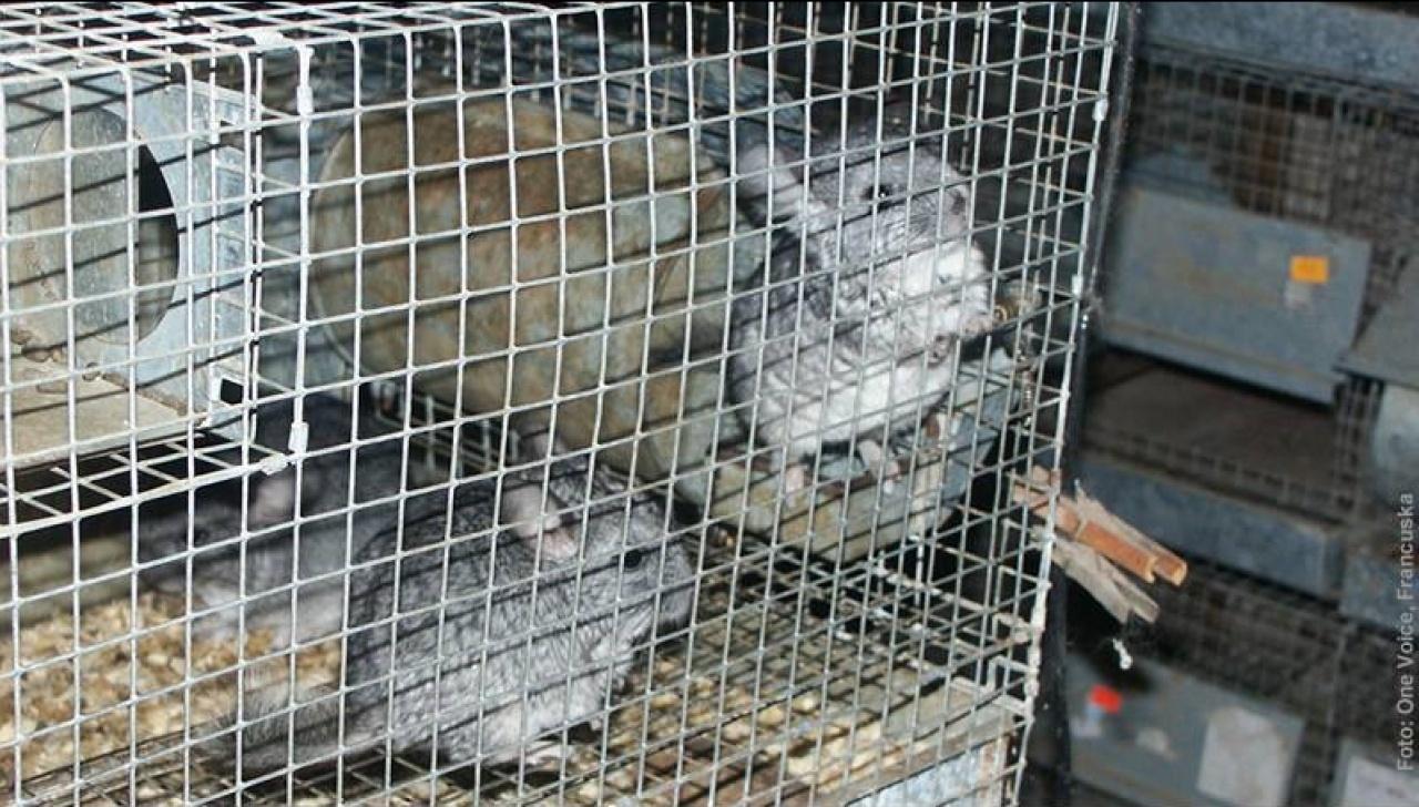 克羅地亞最主要的的皮草養殖動物為栗鼠,早前當地政府通過法例禁止草皮養殖場營運。(Prijatelji Zivotinja facebook)