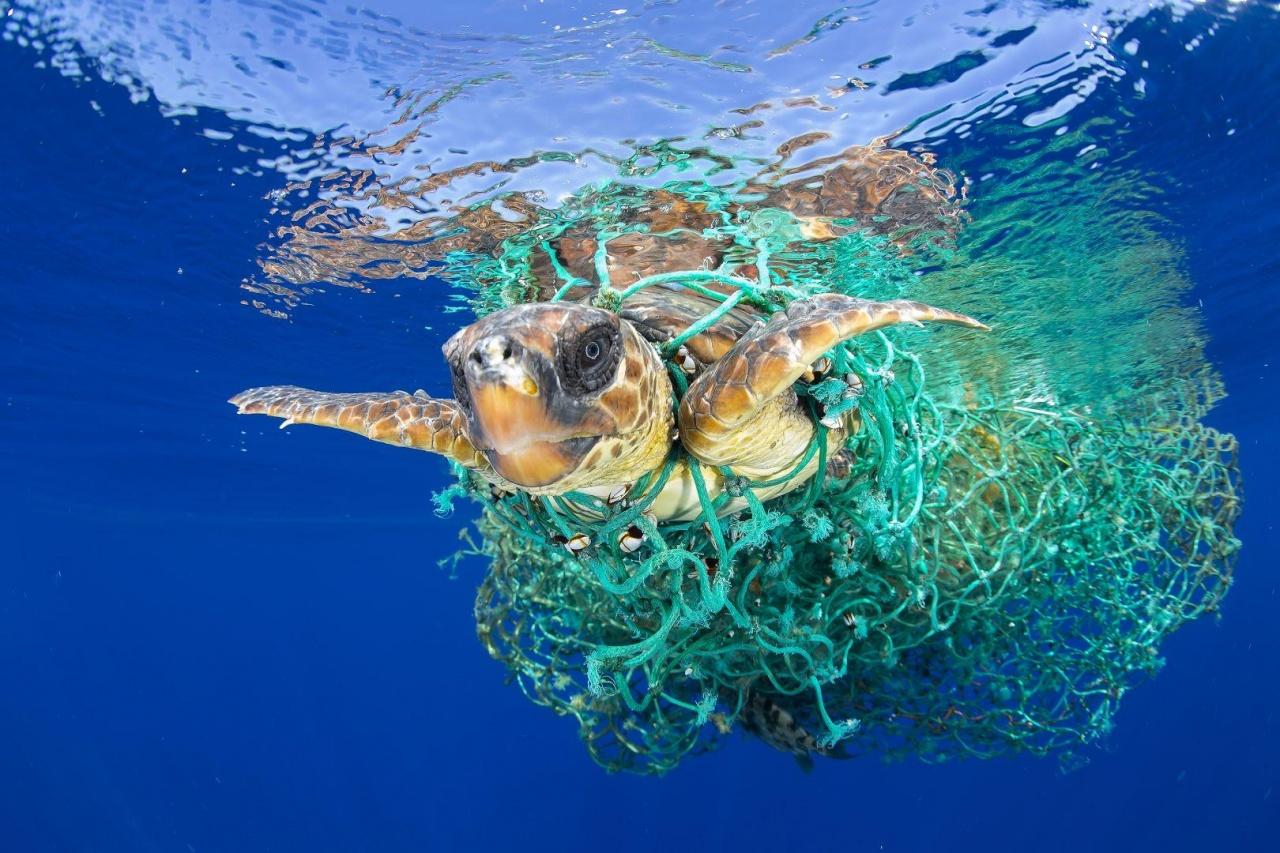 攝影記者紀錄海龜被巨大魚網纏繞身體,赤裸裸地暴露了海洋生物成為捕漁業的犧牲品。(World Press Photo)
