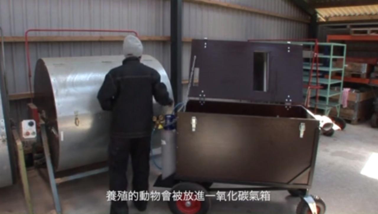 皮草業界指將動物剝皮前,會將牠們放入一氧化碳箱內焗死,過程絕不殘忍和痛苦。(圖:香港毛皮業協會)