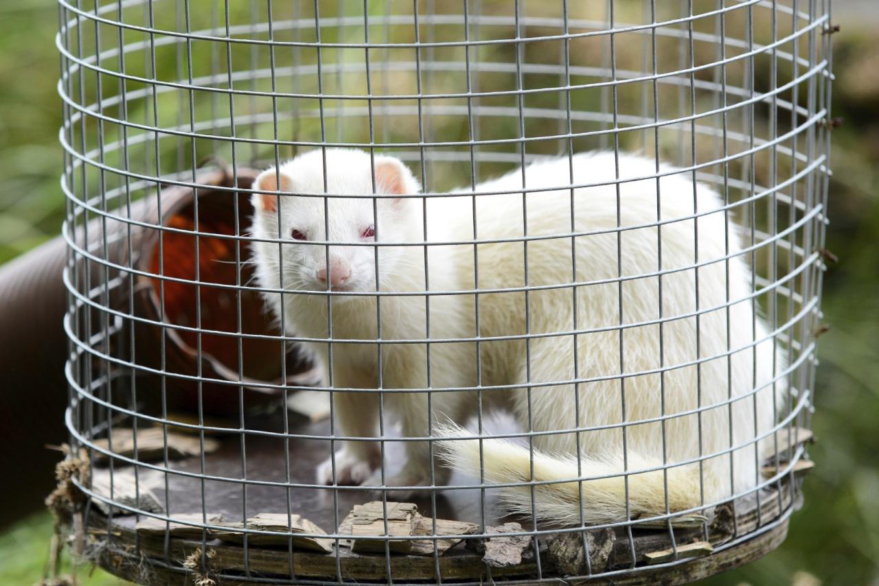 因製成草皮而死的動物包括水貂、龍貓、孤狸、栗鼠、兔子、貂子、浣熊,甚至貓、狗。(圖:IstockPhoto)