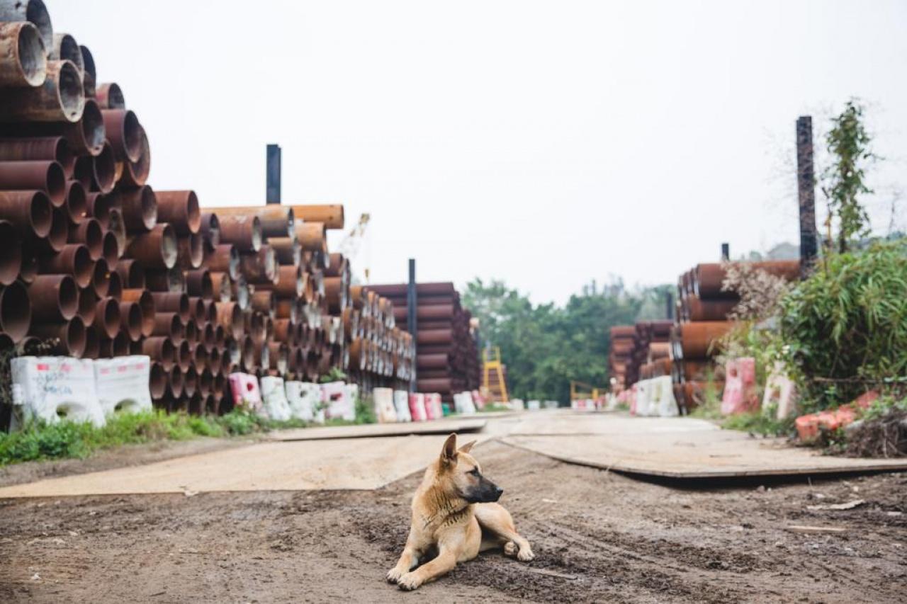 地盤及貨倉普遍會養狗作守門口,但當工程結束,牠們的「地盤」就沒有了。(黃寶瑩攝)