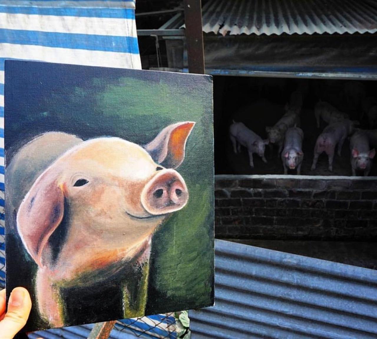 一芯偷偷到香港某間養豬場探豬,她舉起自己的畫作,希望小豬能看到畫作,感受到有人對牠們關懷。