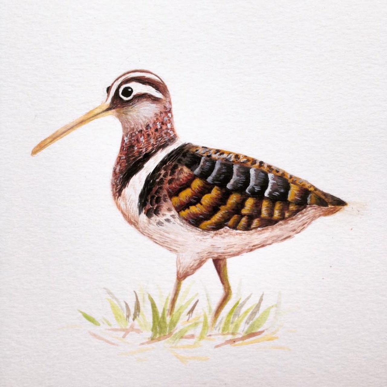 一芯早前為長春社繪畫雀鳥插畫。(受訪者提供)