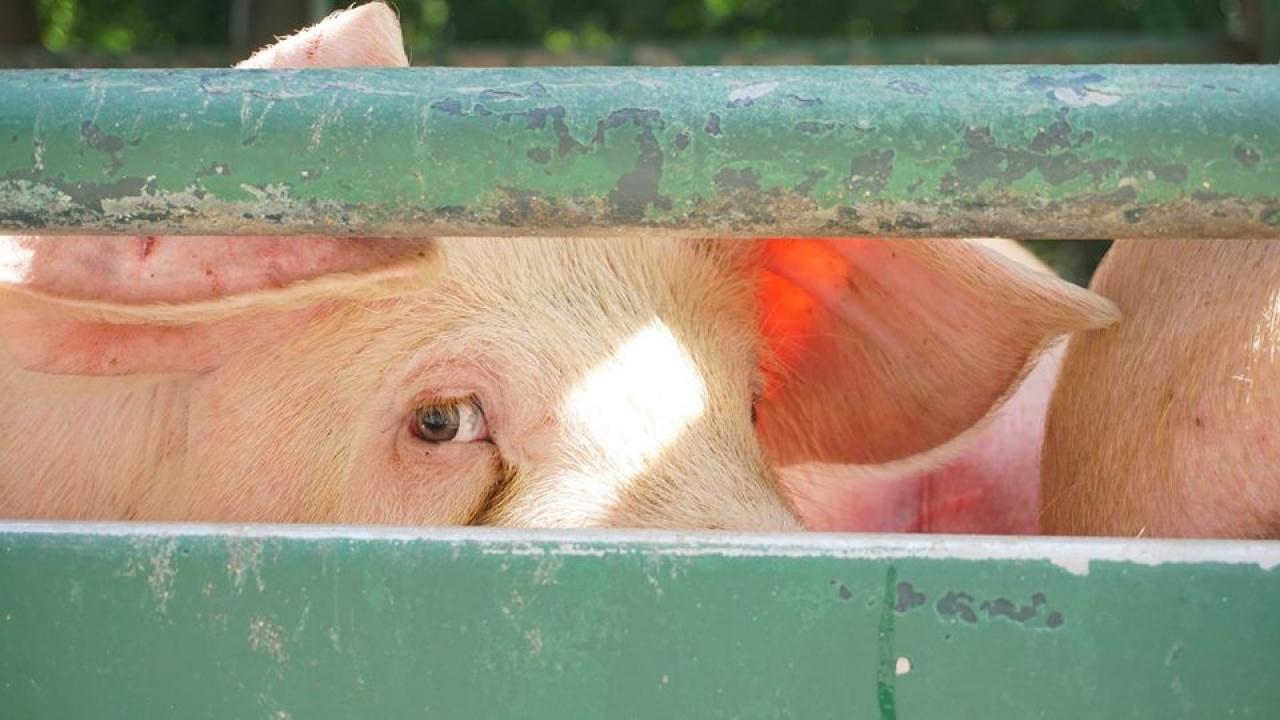 人類和動物的眼睛,是多麼的相似。(受訪者提供)