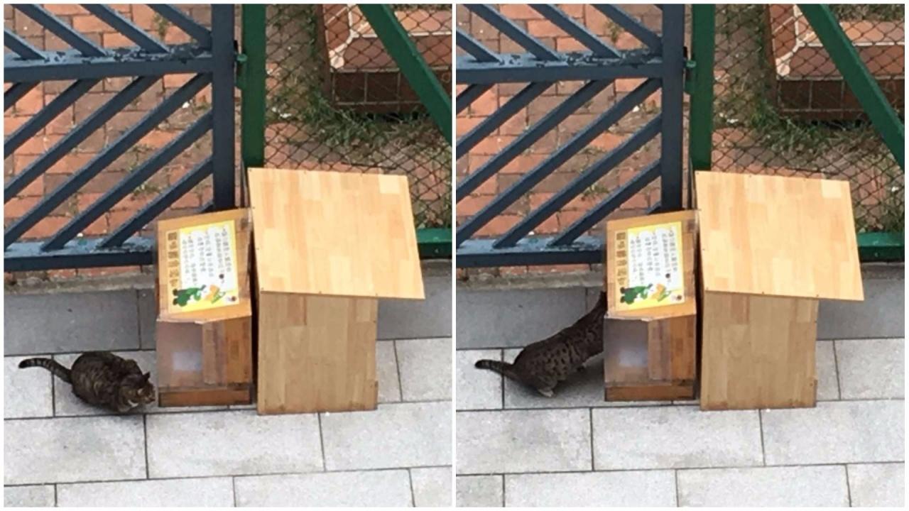 貓屋1.0已初見成效,吸引到校園附近的浪流貓光顧。(浸信會天虹小學提供)