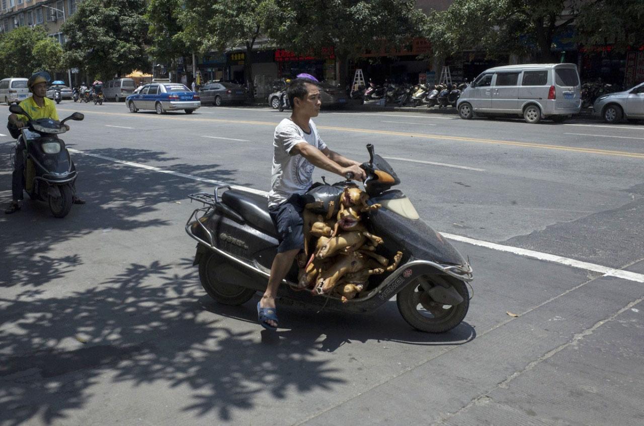 內地販賣狗肉情況猖獗,引起不少本地及國際動保組織抗議取消狗肉節,杜絕售賣狗肉文化。(資料圖片 / 梁鵬威攝)