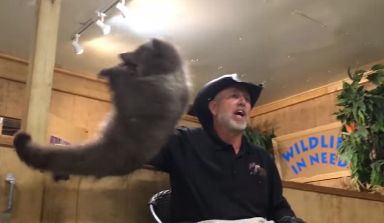 小熊咬着斯塔克的手時,斯塔克一把提起手,令小熊吊在半空。(網上截圖)