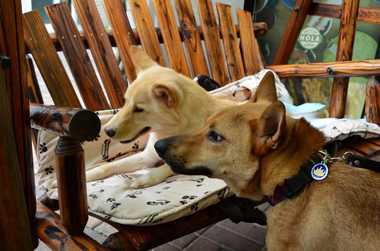 希希(右)的老友Fit少(左)曾中狗瘟,也是需要貼身照顧的狗狗。(黃樂文攝)