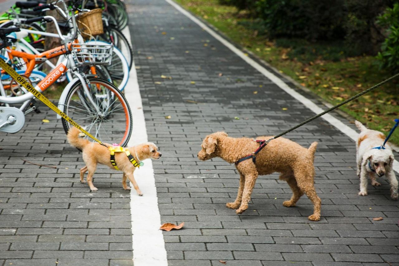記者觀察在上班時間放狗、到寵物展的人,大多飼養有品種的狗,唐狗較為少在街上見到。(黃寶瑩攝)