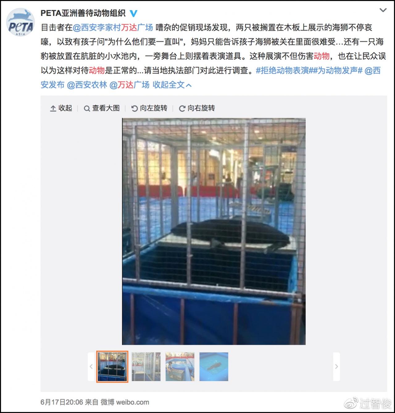 「亞洲善待動物組織」曾披露,西安萬達廣場涉嫌虐待海獅。  (網上圖片)
