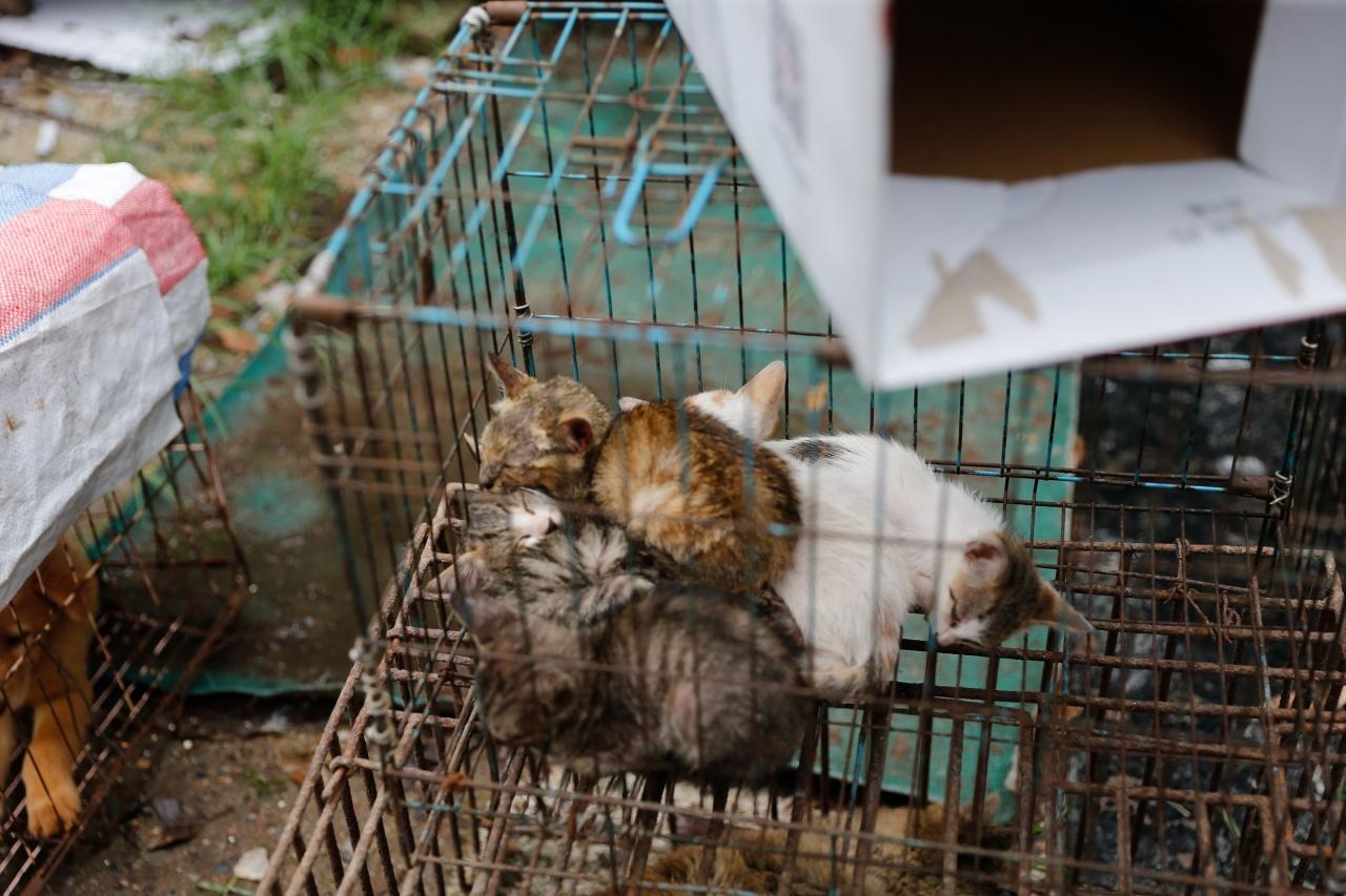 玉林狗肉節現場,亦有出售貓的攤販。(梁鵬威攝)