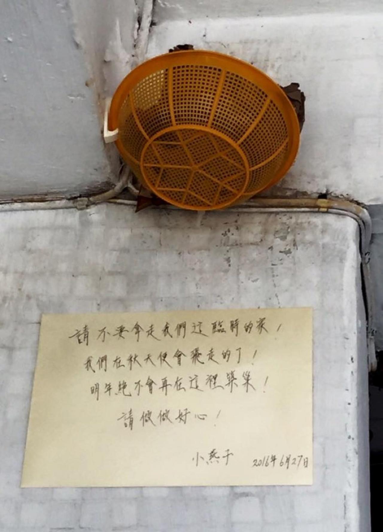 但燕巢在6月底被人拆掉,街坊情急下買來膠筲箕權充人工燕巢,為雛燕找回臨時的家。(Facebook專頁「長洲足跡」圖片)