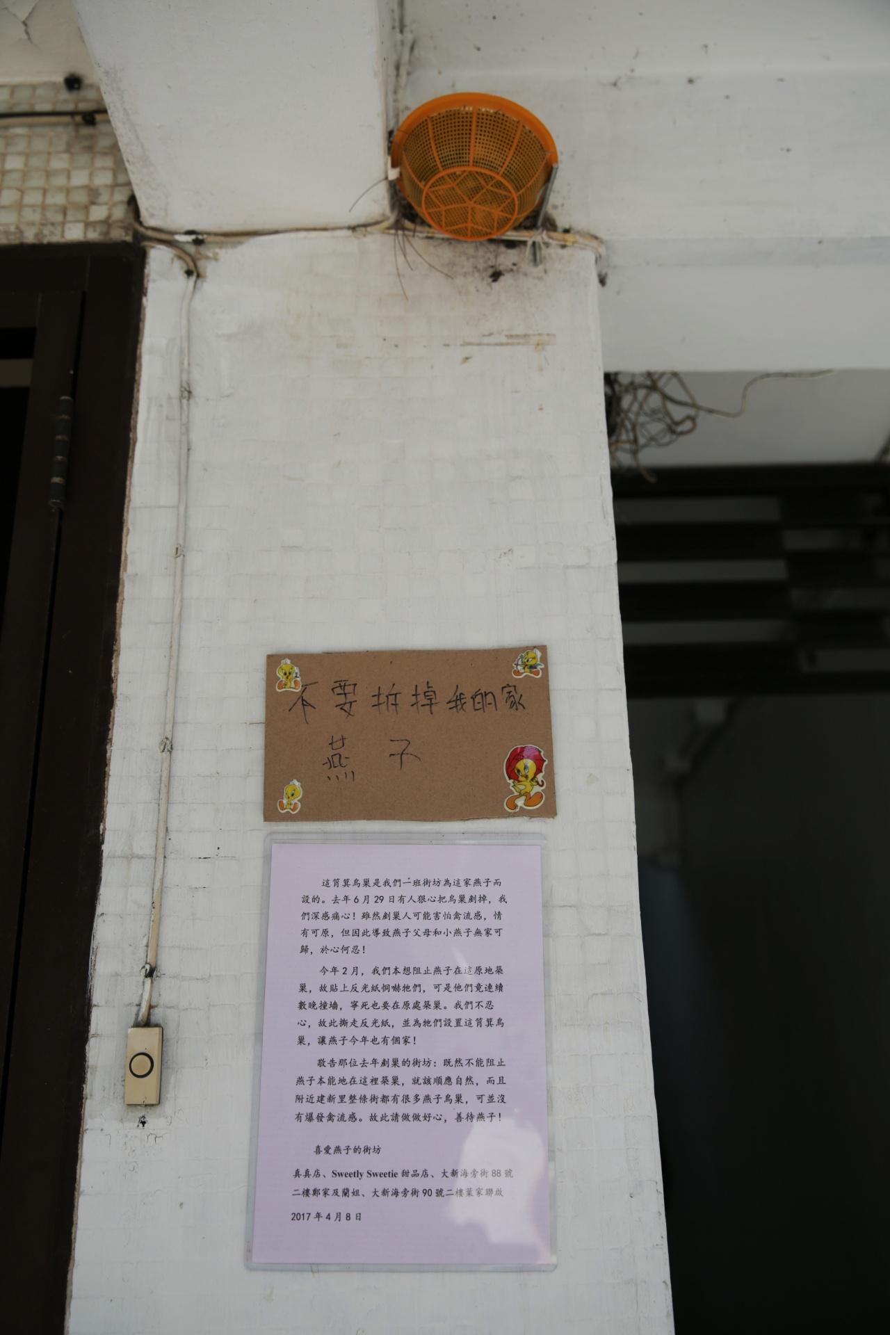 街坊再為燕子掛上人工燕巢助繁殖。(黃偉民攝)