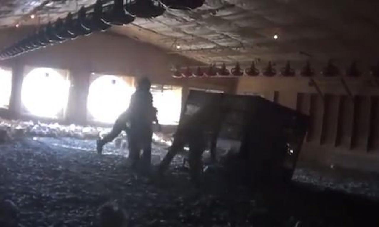 工人粗暴地捉住雞隻擲入籠內,再把牠們運送至屠宰場。(片段截圖)