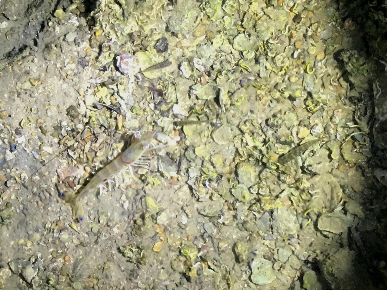 蟹蝦都懂得用沙來掩埋自己,逃離敵人的威脅。這不是「新鮮」與否,這是「生命力」。(相片由作者提供)