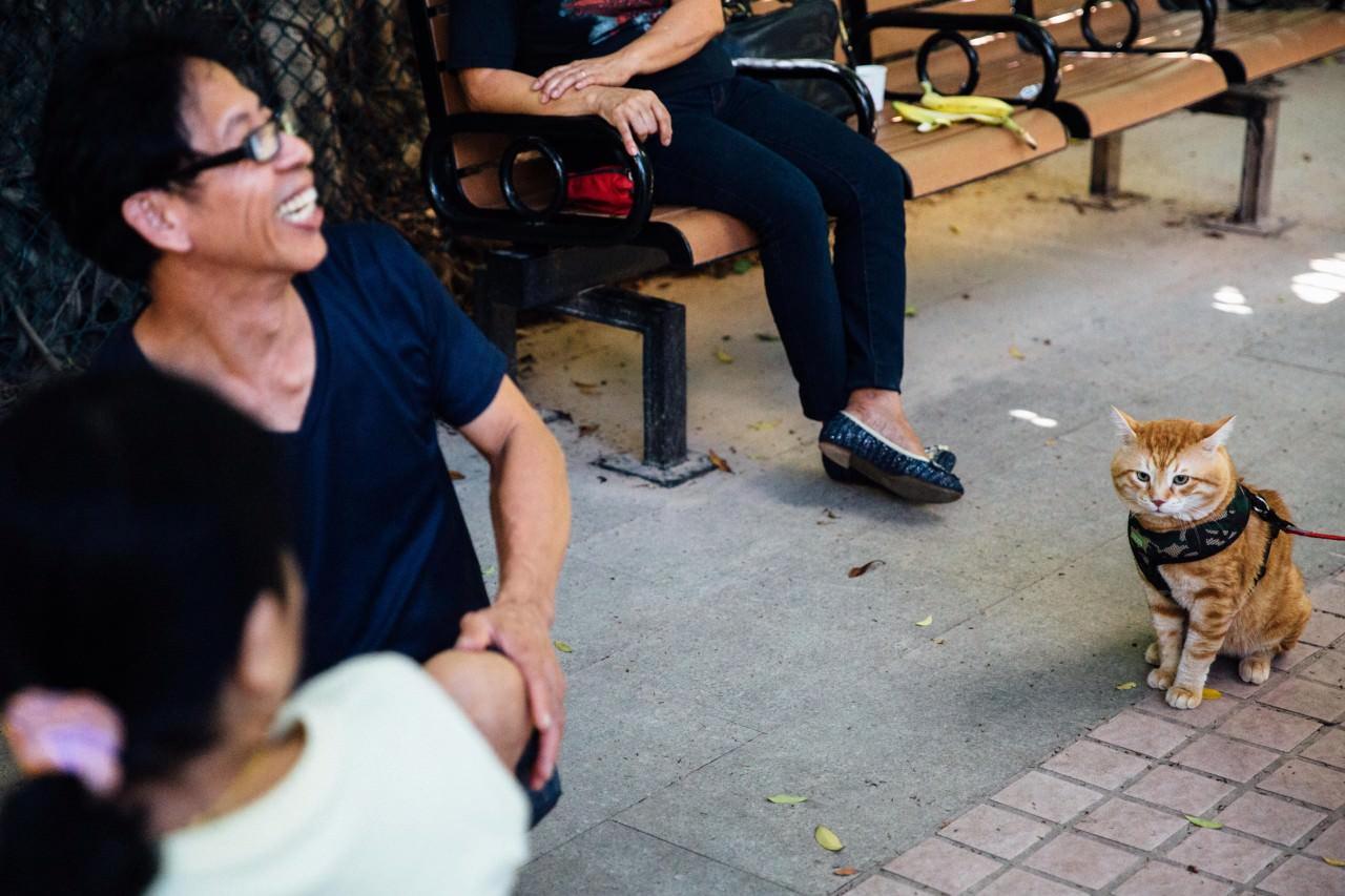 附近街坊都很熟悉這位遠道而來的江湖大佬。(鍾偉德攝)
