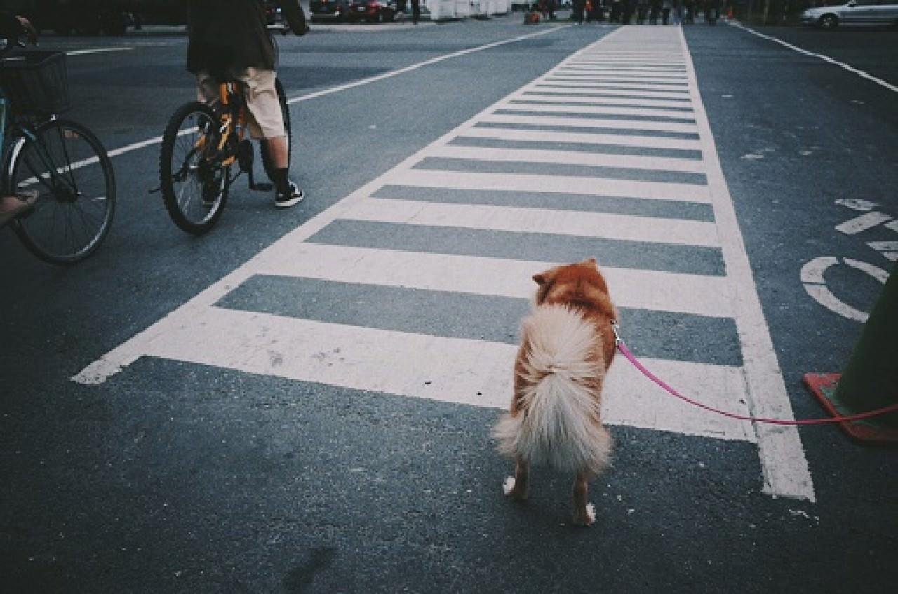 別帶狗狗走到馬路上,易生交通意外。(Getty Images)