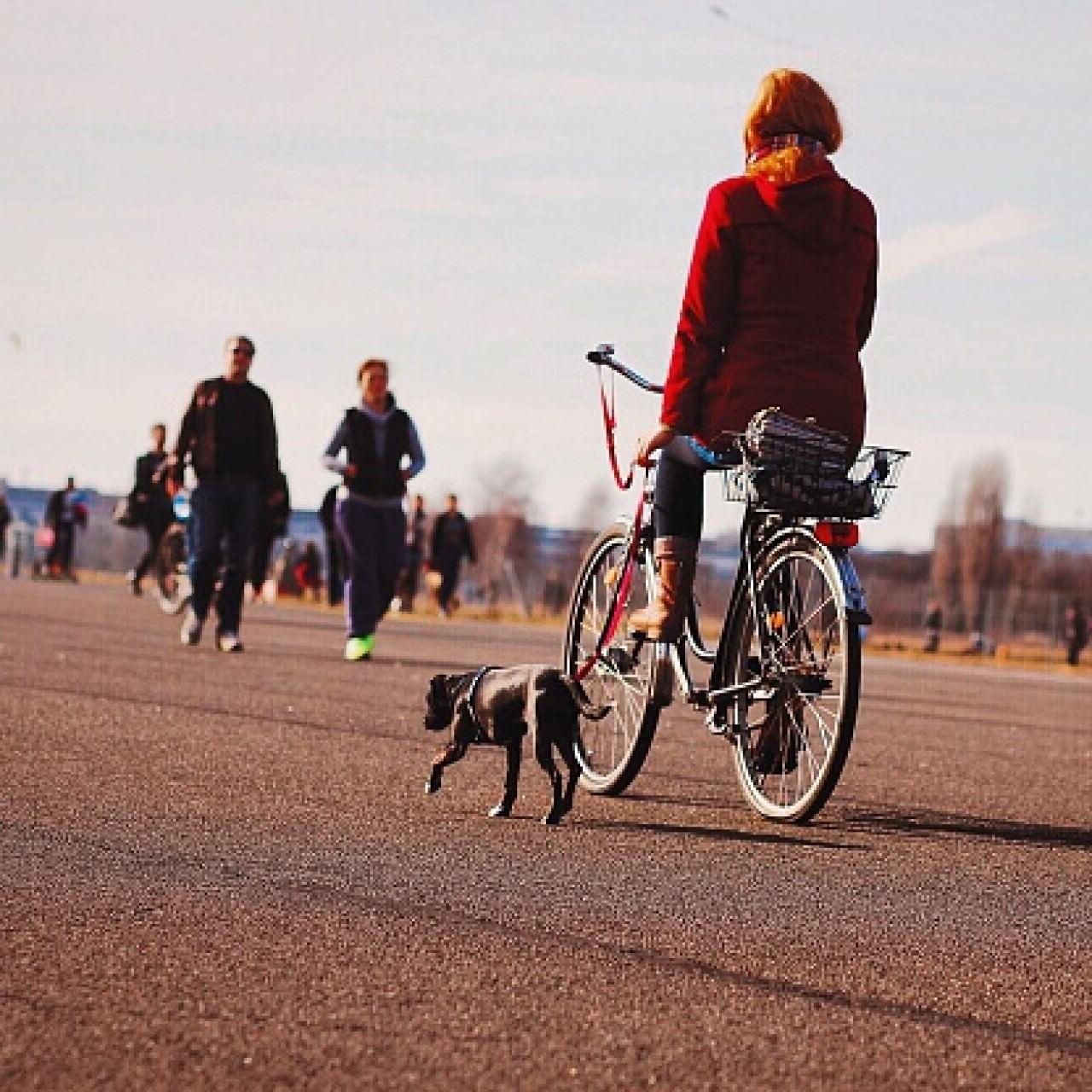 剛剛嘗試以單車遛狗,主人要多加狗狗身體狀況,由慢車開始。(Getty Images)